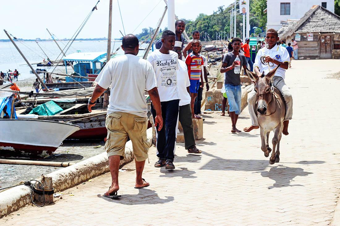 Lamu Cultural Festival_donkey race4