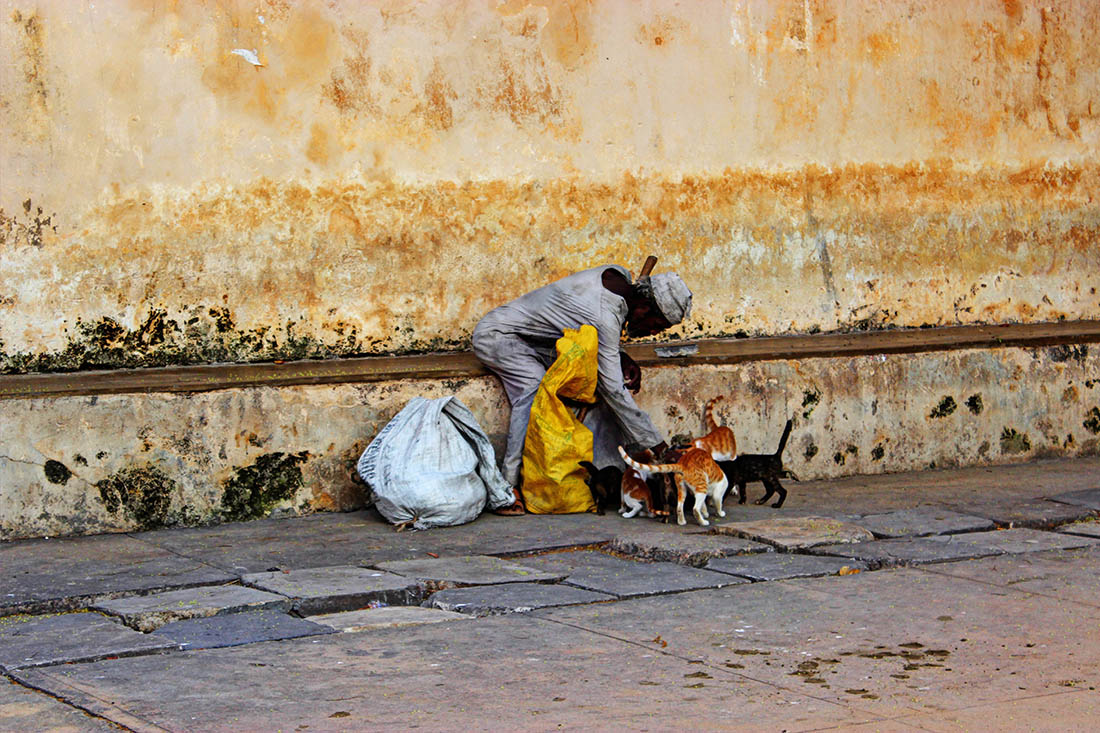 Lamu Town_Man feeding cats