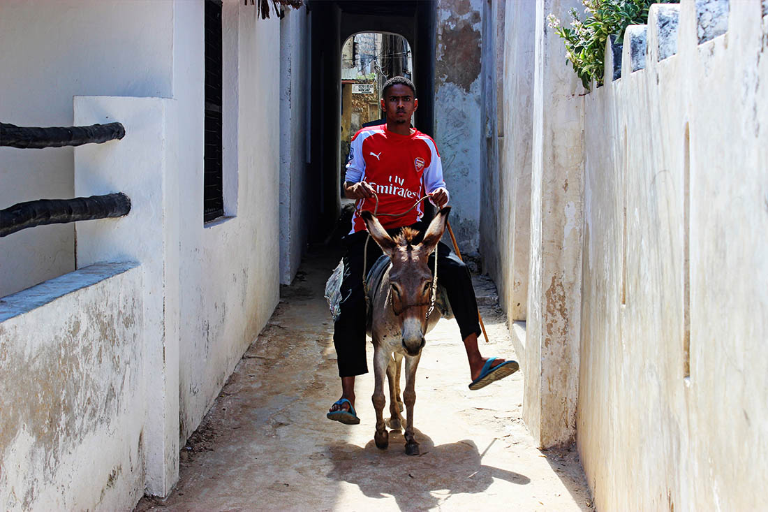 Lamu Town_Man on donkey