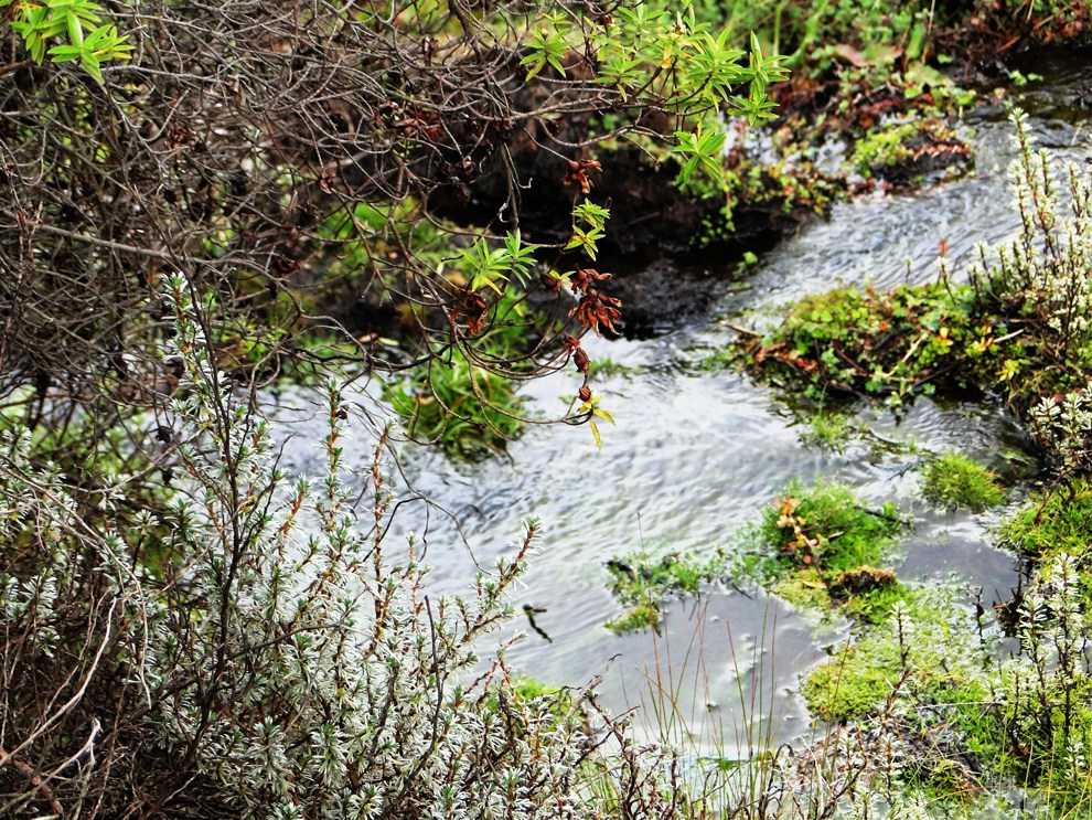 Aberdare National Park_stream