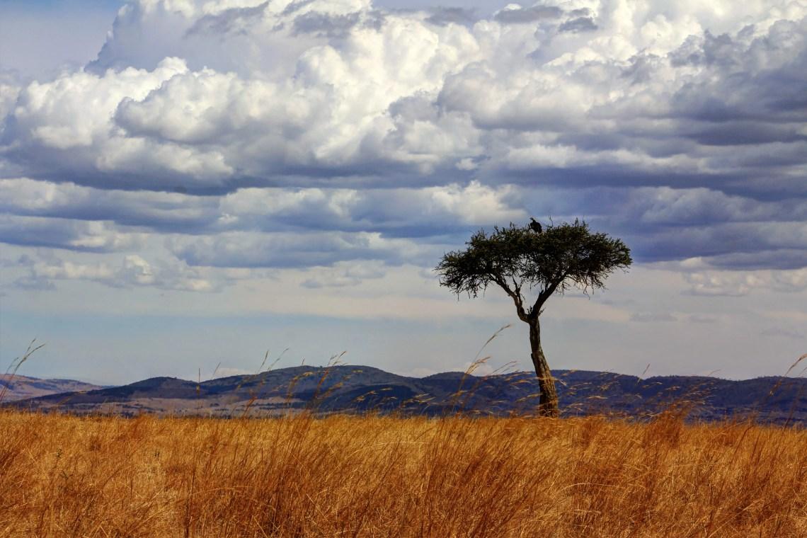 Maasai Mara_Lone tree1