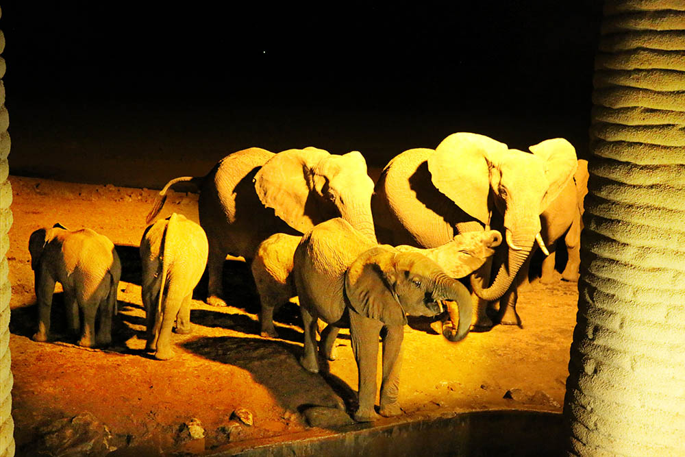 sarova-salt-lick-game-lodge_elephant-herd