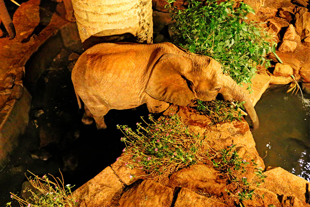sarova-salt-lick-game-lodge_elephant-in-waterhole