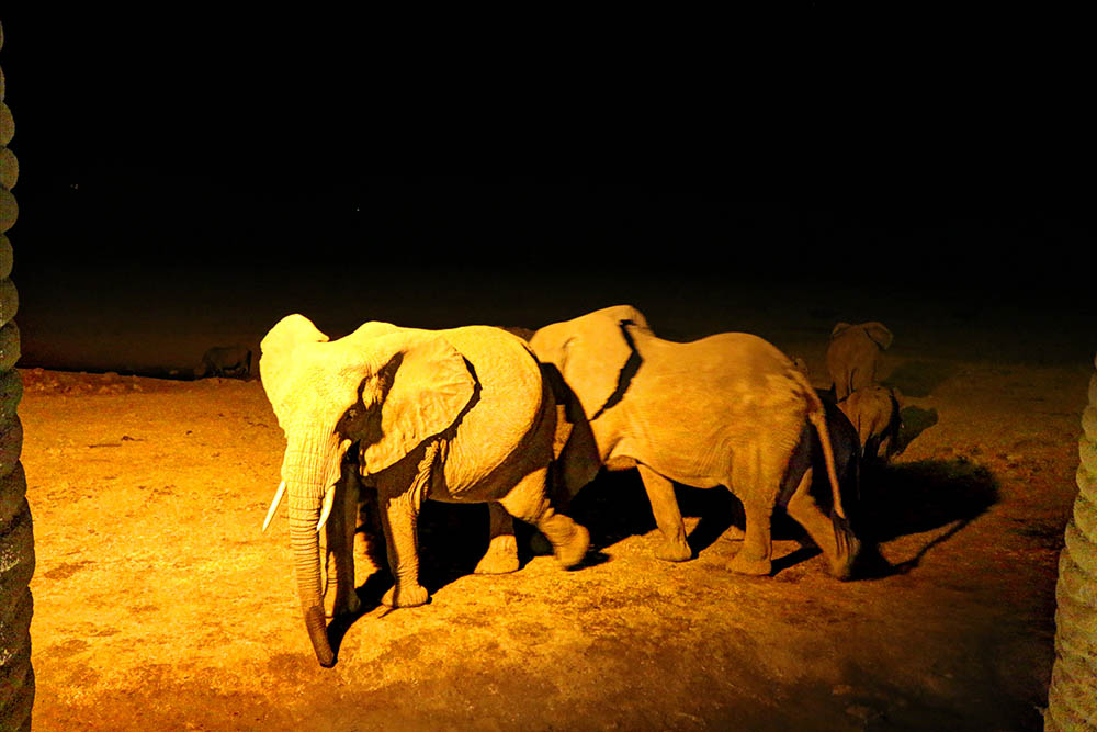sarova-salt-lick-game-lodge_elephants1