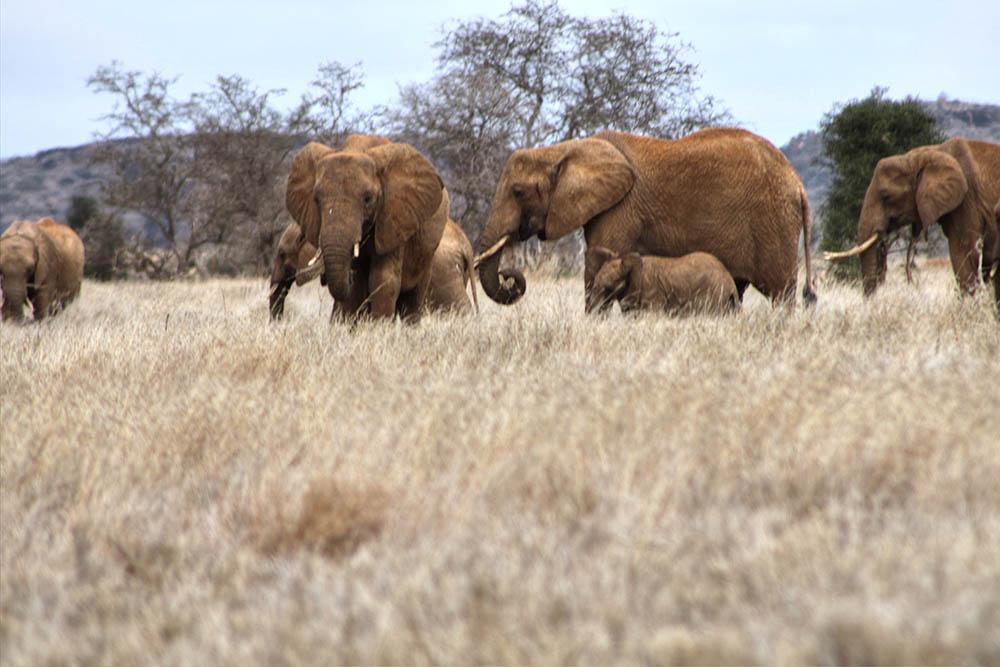taita-hills-game-reserve_elephants