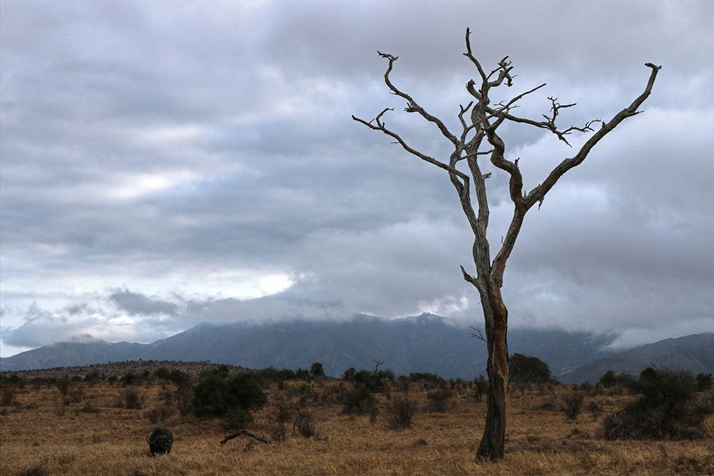 taita-hills-game-reserve_lone-tree
