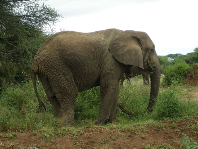 5 Day Safari to Manyara Ngorongoro Serengeti