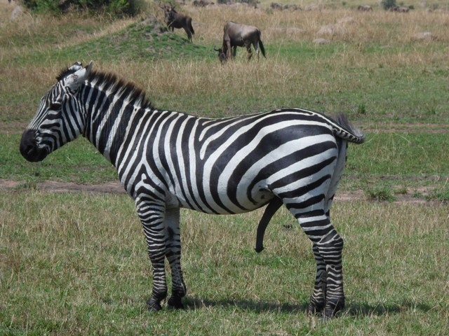 5 Days Safari to Selous and Mikumi