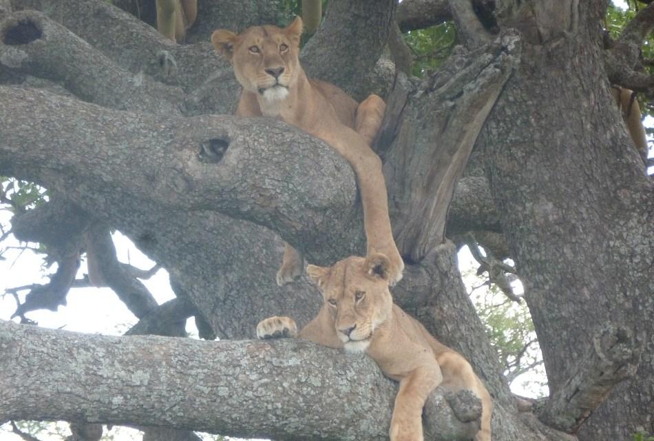 Tanzania Safari 5 Day's Lodge Ngorongoro Serengeti