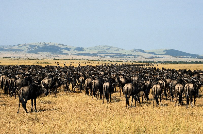 Serengeti Migration 6 Day's 5 Nights Lodge Safari
