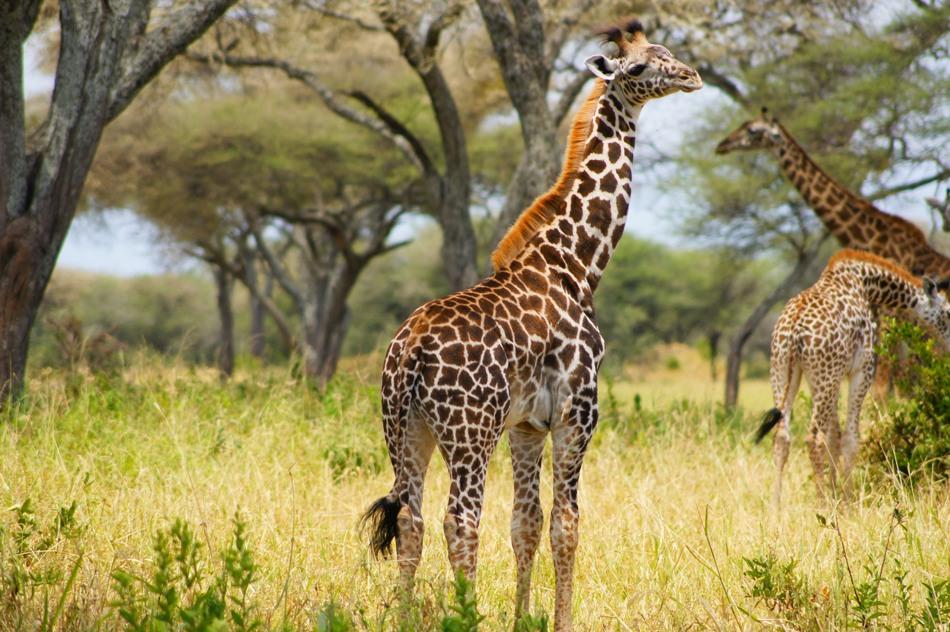 2 Nights 3 Days Safari Tarangire,Ngorongoro