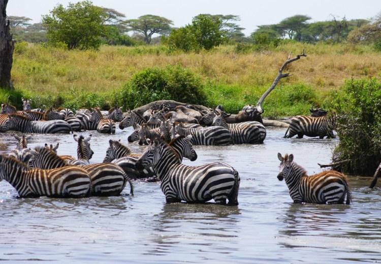 Serengeti Safari Tanzania
