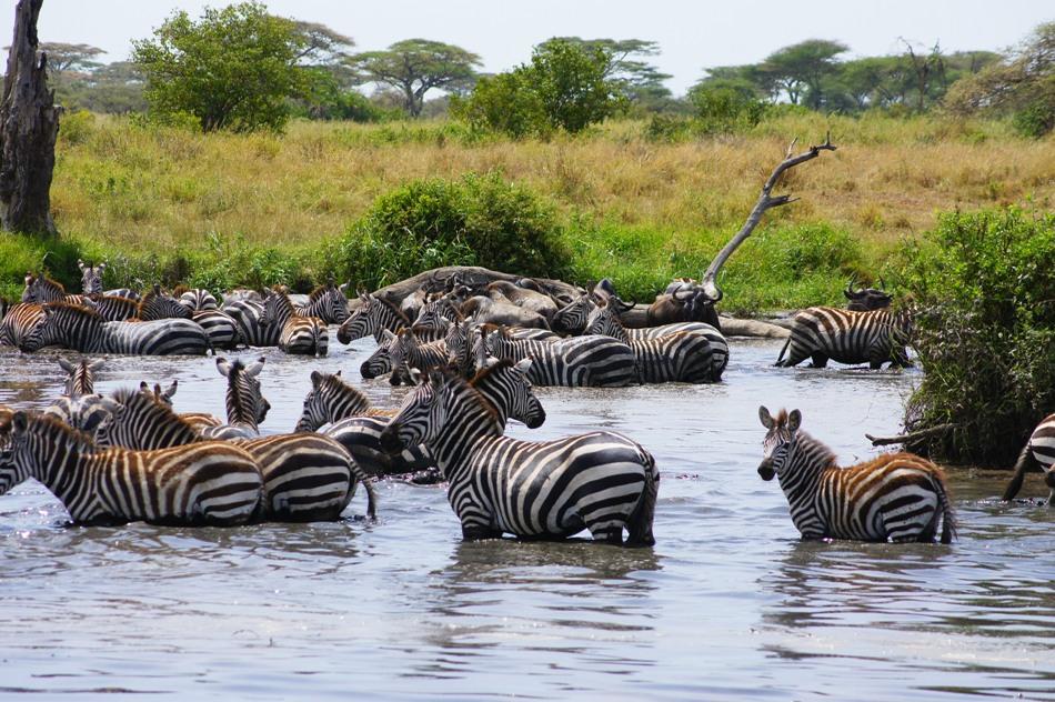 Mwanza-Serengeti Safari 3 days