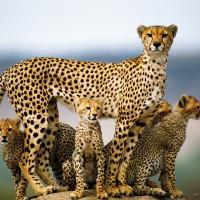 5 Days Camping Safari Serengeti Ngorongoro