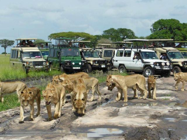 4 Day Budget Tanzania Safaris