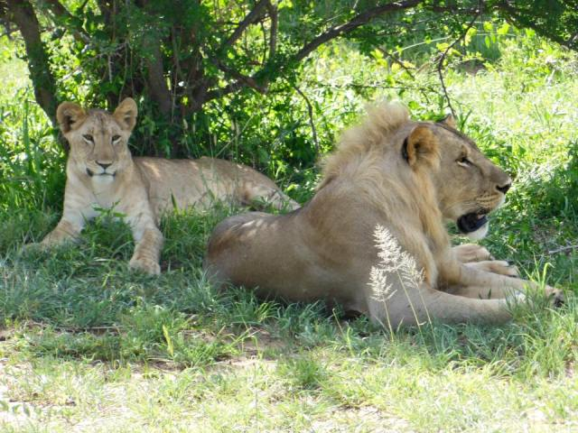 7 Days 6 Night's Camping Safari