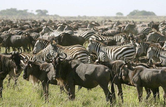 5 Days Ndutu Safari