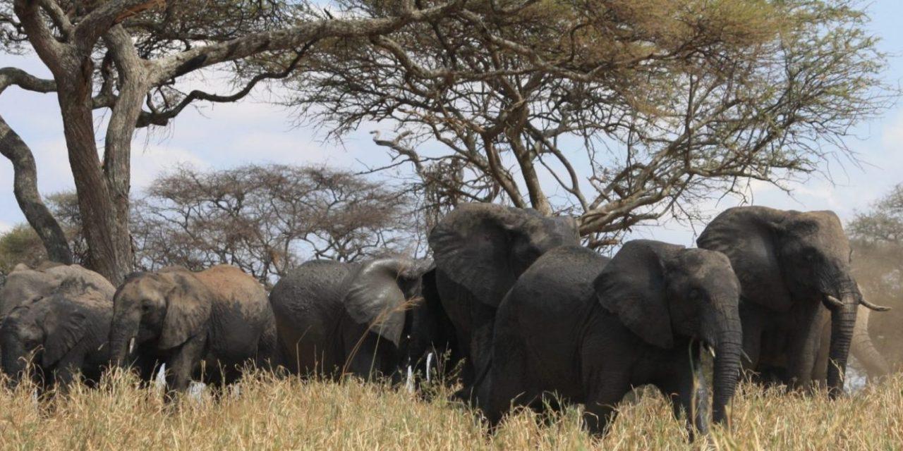 3 Days Lodge Safari Serengeti Ngorongoro