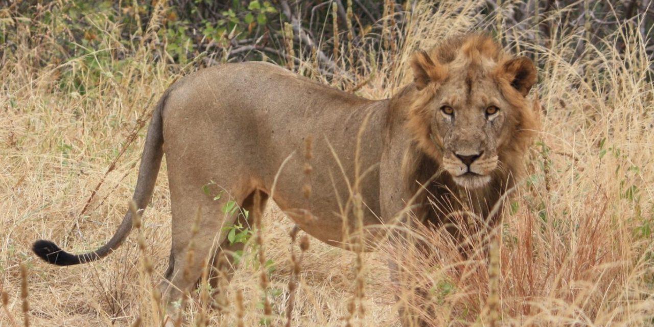 6 Days Safari Arusha Mwanza
