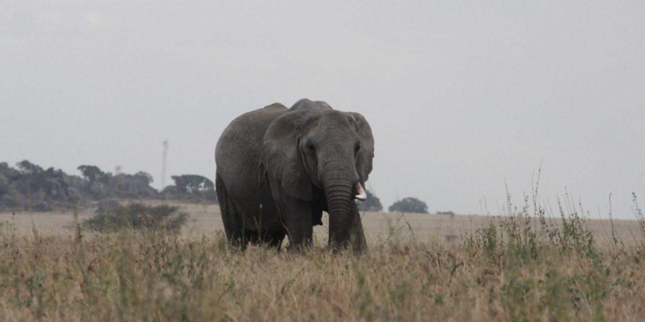 7 Days Tanzania Big Five Safari