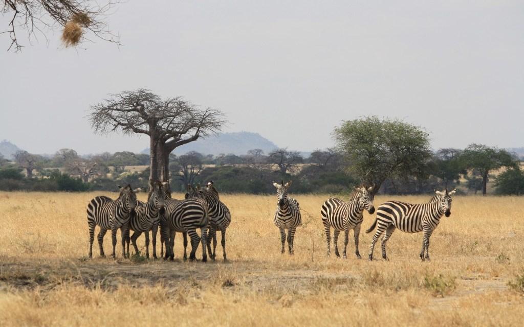 5 Days Lodge Safari Maasai Mara Amboseli