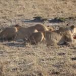 6 Days Lodge Safari Isebania Maasai Mara Nakuru Naivasha