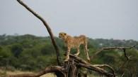 kenya-and-tanzania