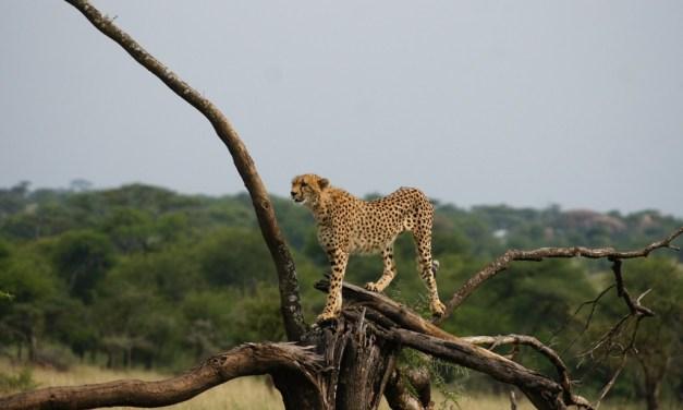 12 Days Lodge Safari Kenya andTanzania