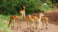 5 Days Serengeti And Ngorongoro Safari, Daily Departures