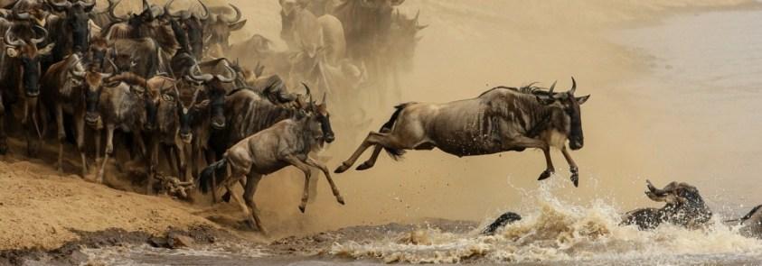 Wildebeest migration Masai Mara Serengeti