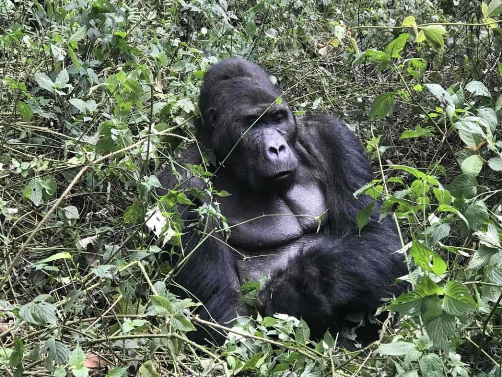5 Days Congo Gorilla Nyiragongo Safari