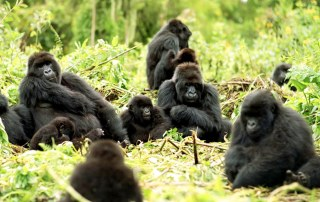 12 Days Uganda Gorilla, Wildlife Chimpanzee & Culture Safari