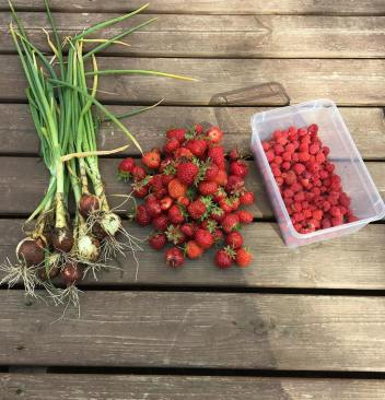 On todays shopping list aka exclusively freshly picked: onions, strawberries and raspberries (the smell! oh that smell). I spent the morning hours picking raspberries and it feels a lot like fall already. So beautiful and precious watching the seasons change in front of your eyes!