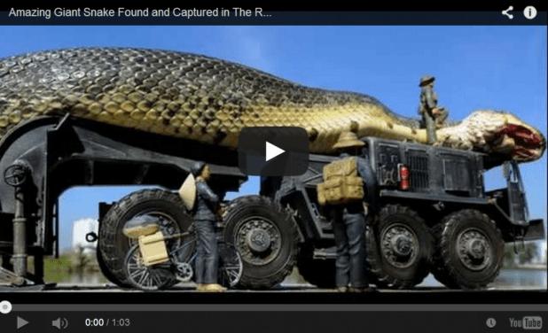 snake.video