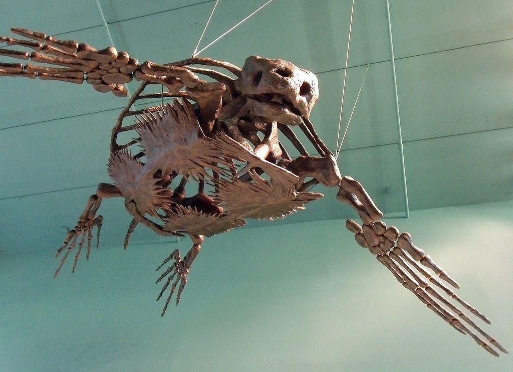 fosil kura kura archelon