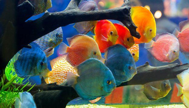 ikan di dalam aquarium