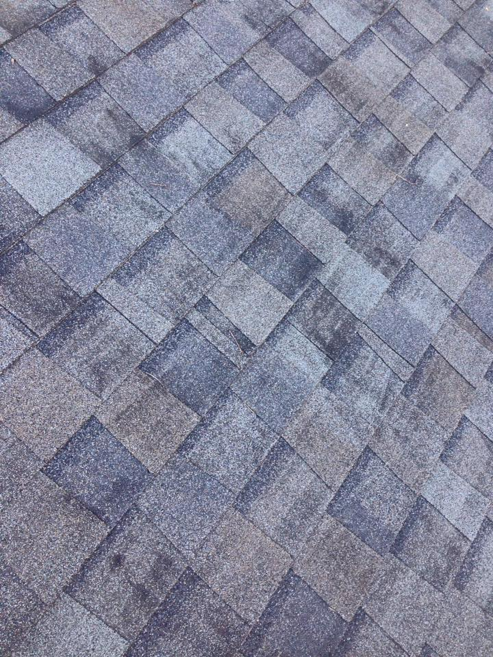 Black Stains Archives ⋆ Apple Roof Cleaning Tampa Florida