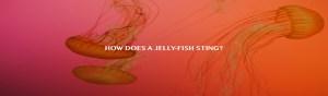 Safe Sea Anti-jellyfish Sting Protective Lotion SafeSea® Sunscreen
