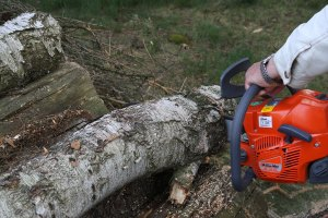 chainsaw injury prevention
