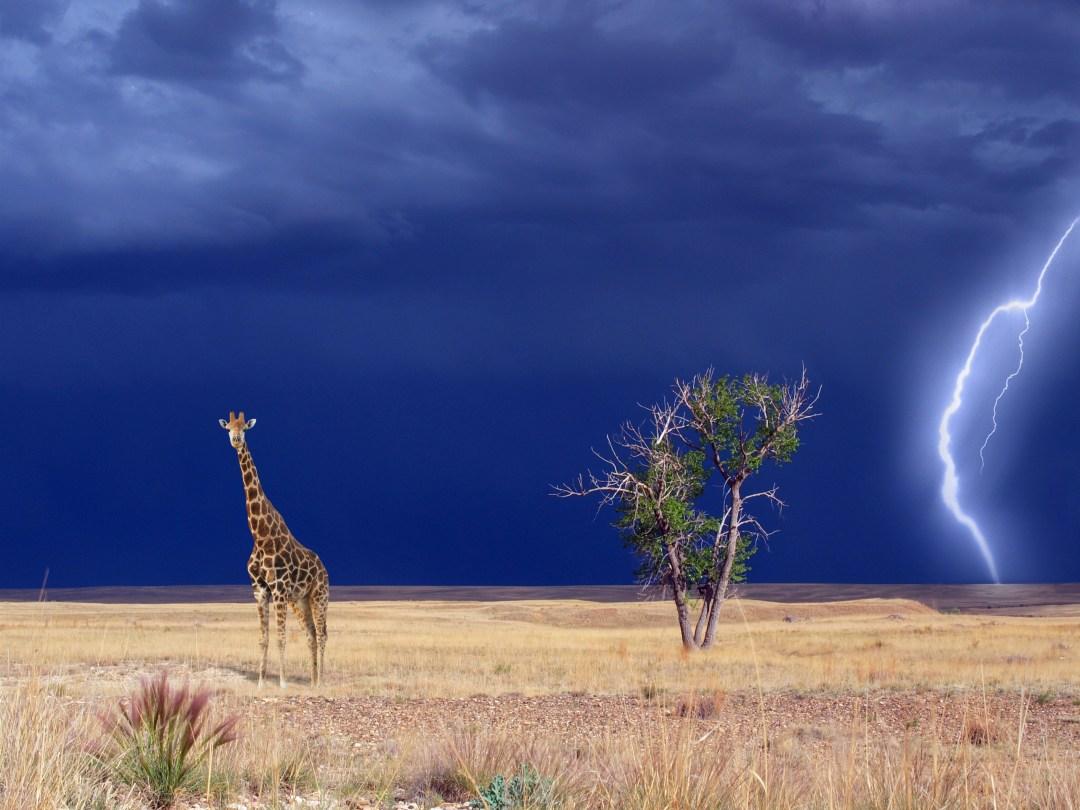 Giraffe_NeuPAddy