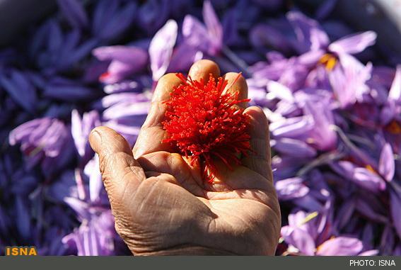 زعفران,قیمت زعفران,صادرات زعفران,بازار زعفران,زعفران قائنات,زعفران صادراتی,زعفران بسته بندی