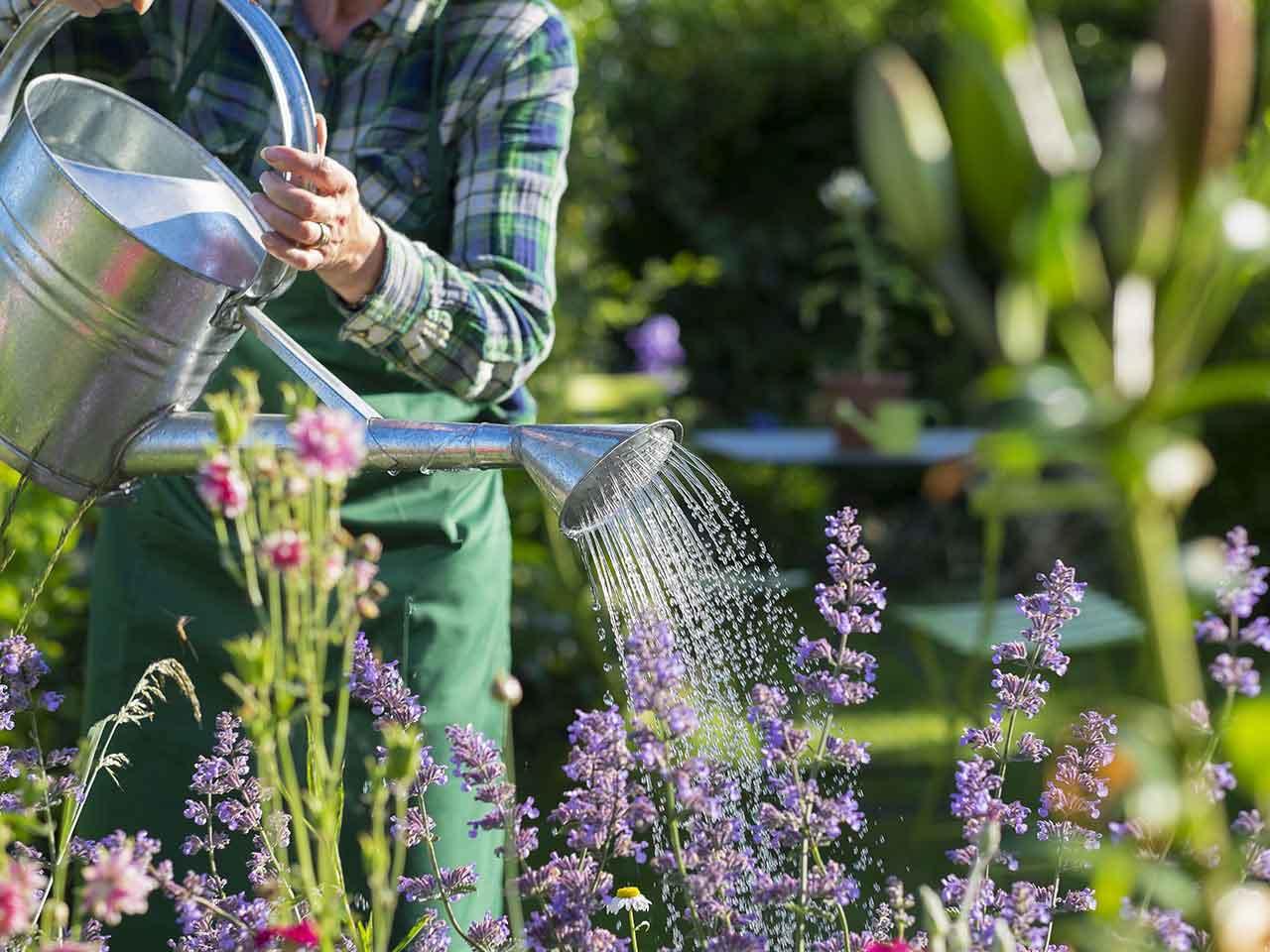 The health benefits of gardening - Saga on Gardening  id=75976