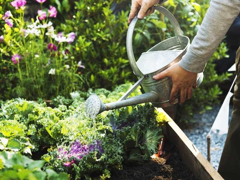 Practical guide to watering the garden - Saga on Gardening  id=55469
