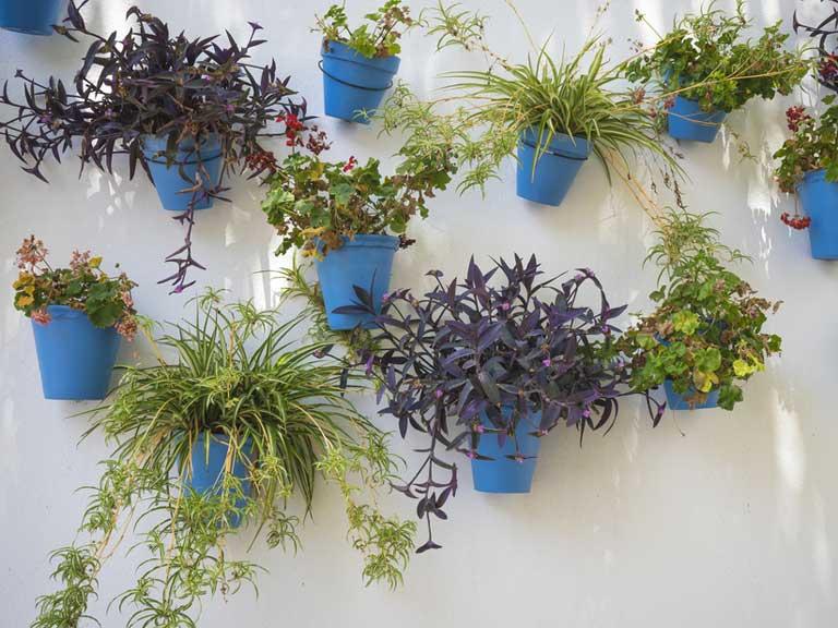 Vertical garden ideas - Saga on Garden Patio Wall Ideas id=69742