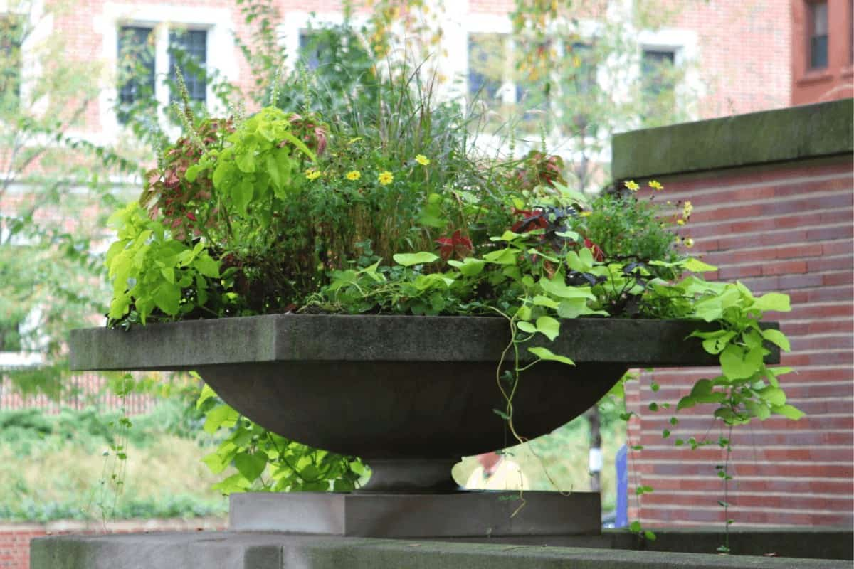Photo of large Prairie style urn with plants and flowers.