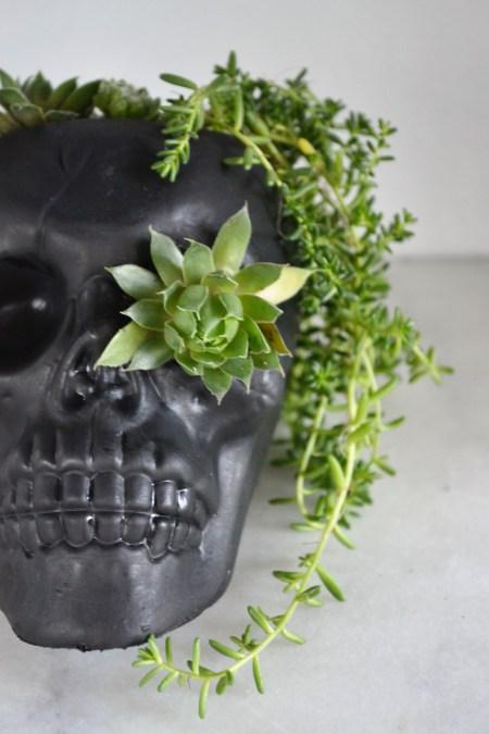 DIY Skull Succulent Planter