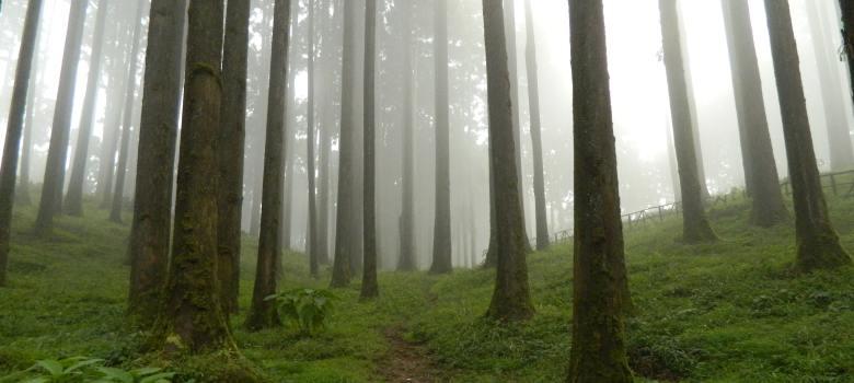 druidi_foresta_celti