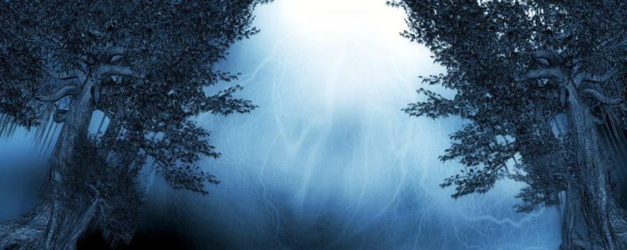 oroscopo_degli_alberi