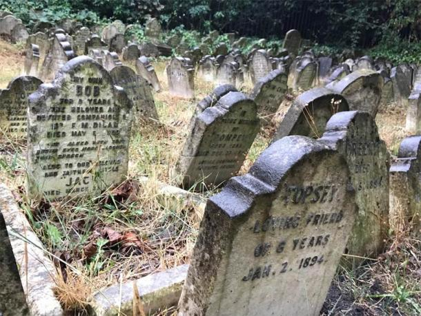 cimiteri animali