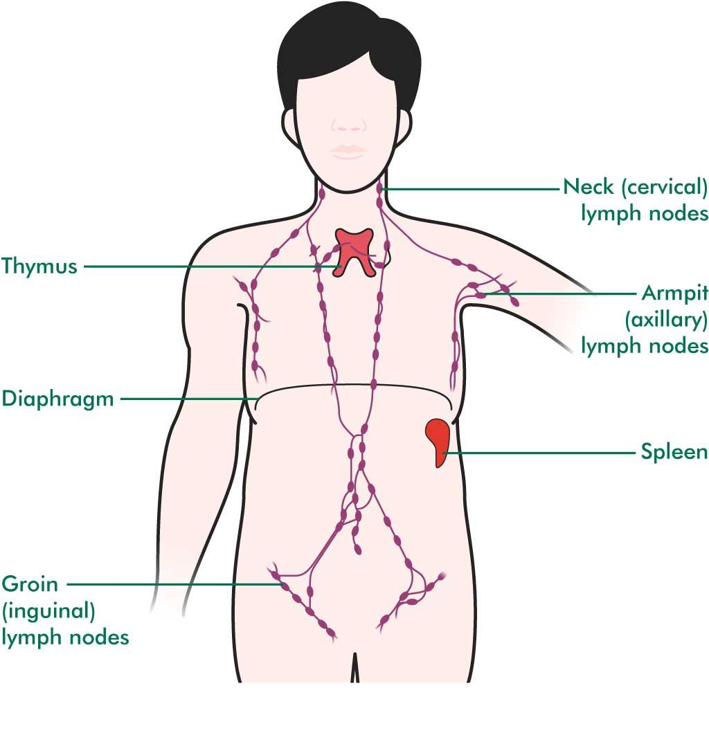 Lenfoma Kan Testi